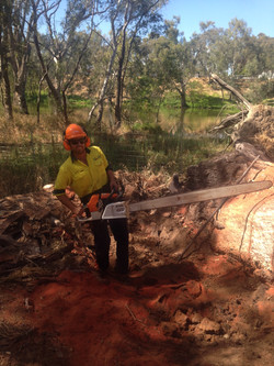 Tree Removal Albury