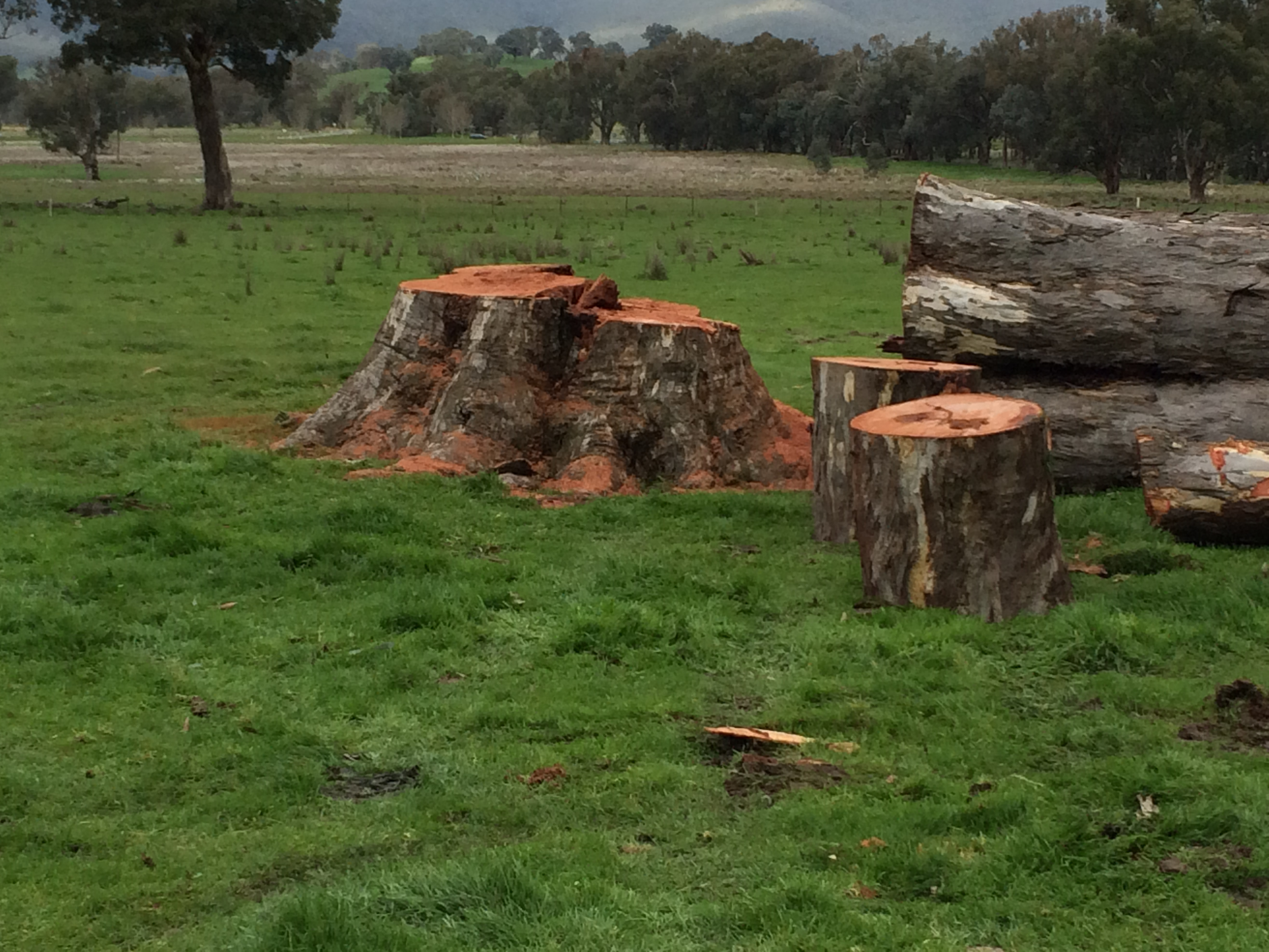 Tree Felling Wodonga Albury NE Vic