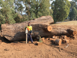 Tree Removal Wodonga