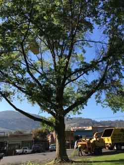 Pruning & Chipping Wodonga