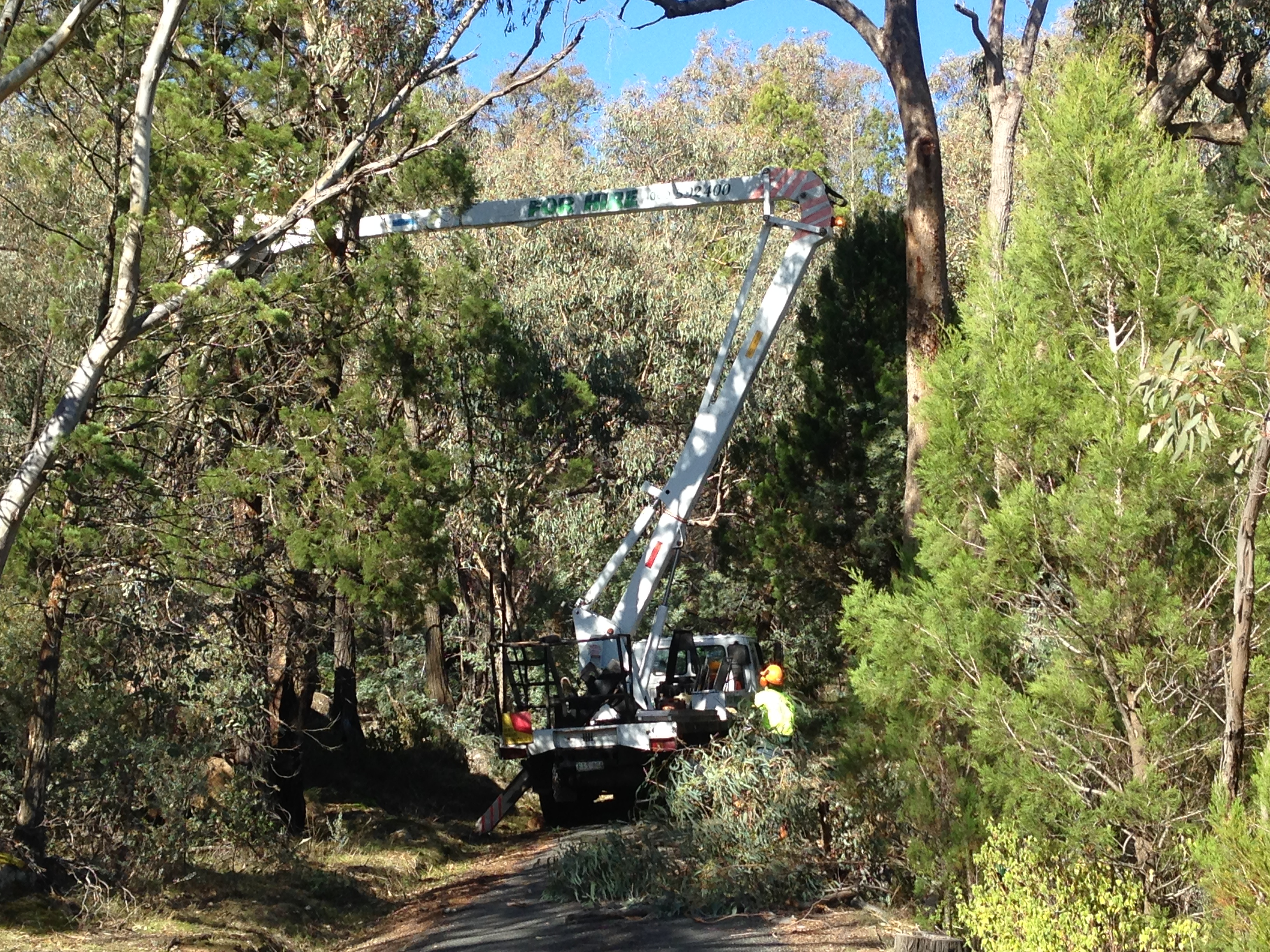 Trees Trimmed Beechworth