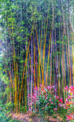 photographe christine gauvin enchantement bambous(17)