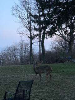 鹿 Deer 🦌