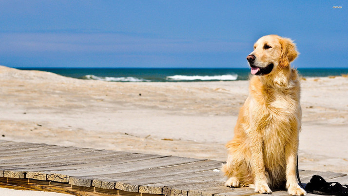Beach Ratio of Dogs to Humans Now 1:1