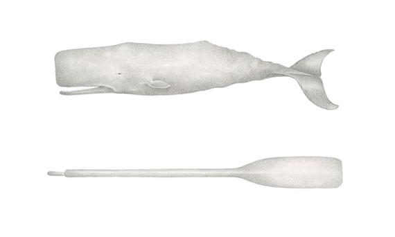 Whale & Oar