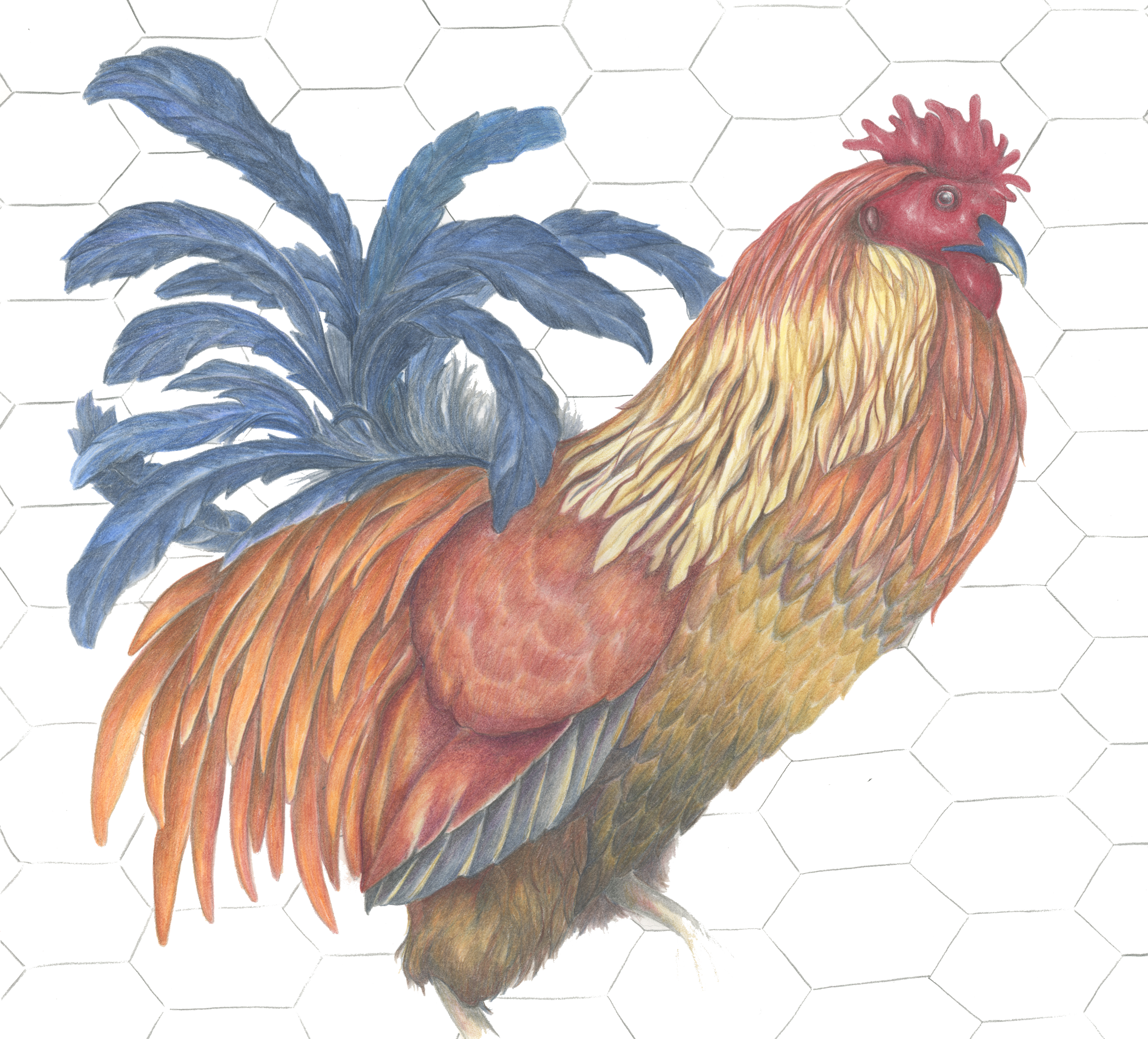 SOLD Rooster