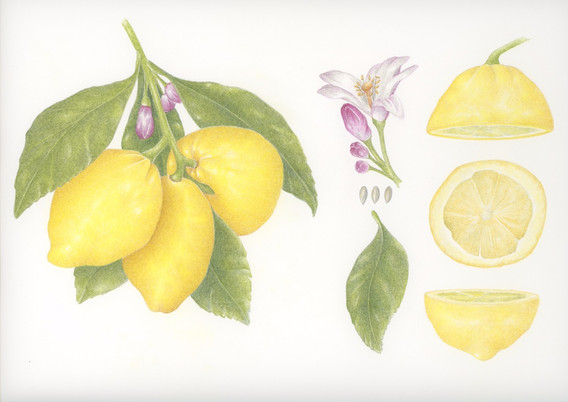 Lemons and Pieces