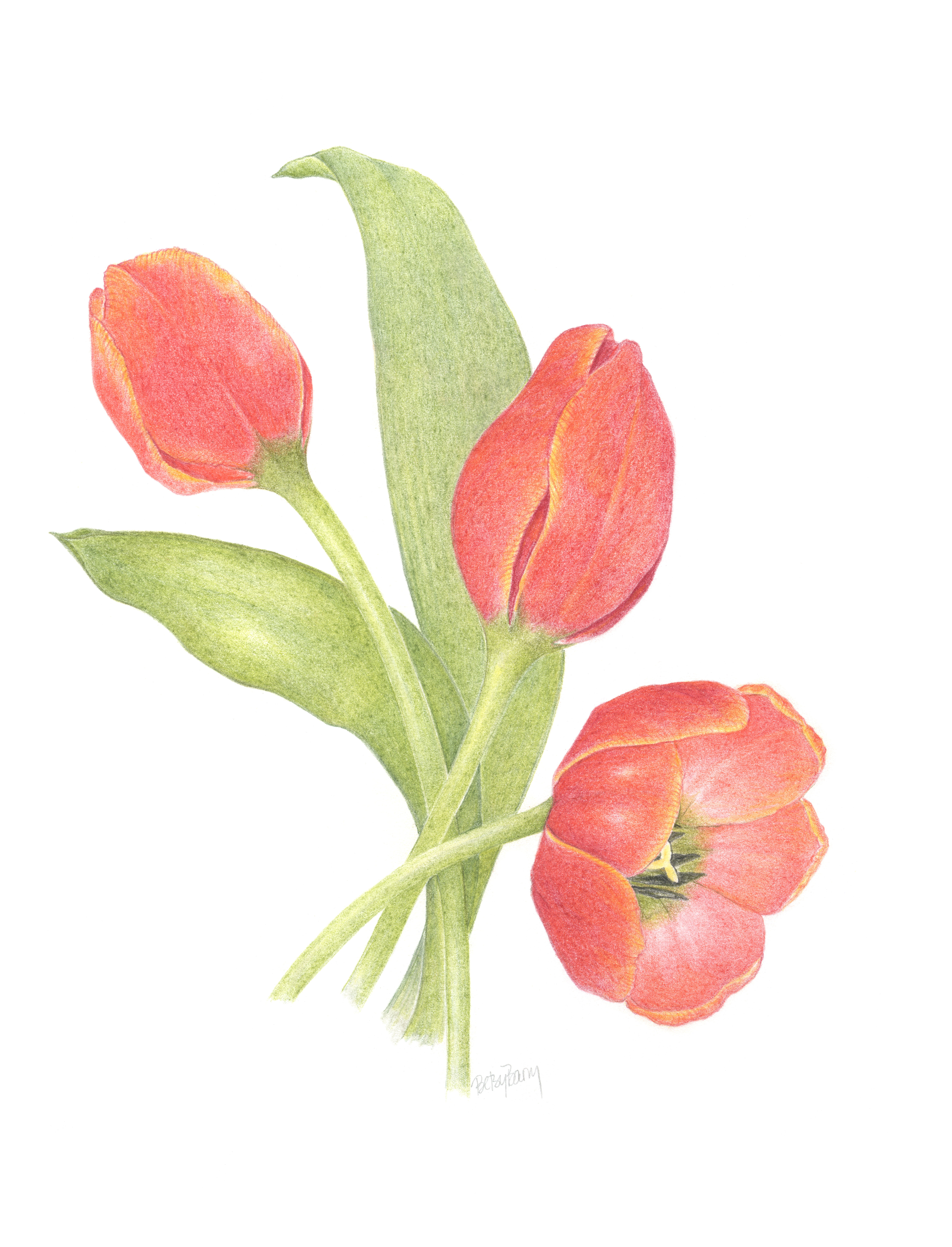 SOLD Tulips