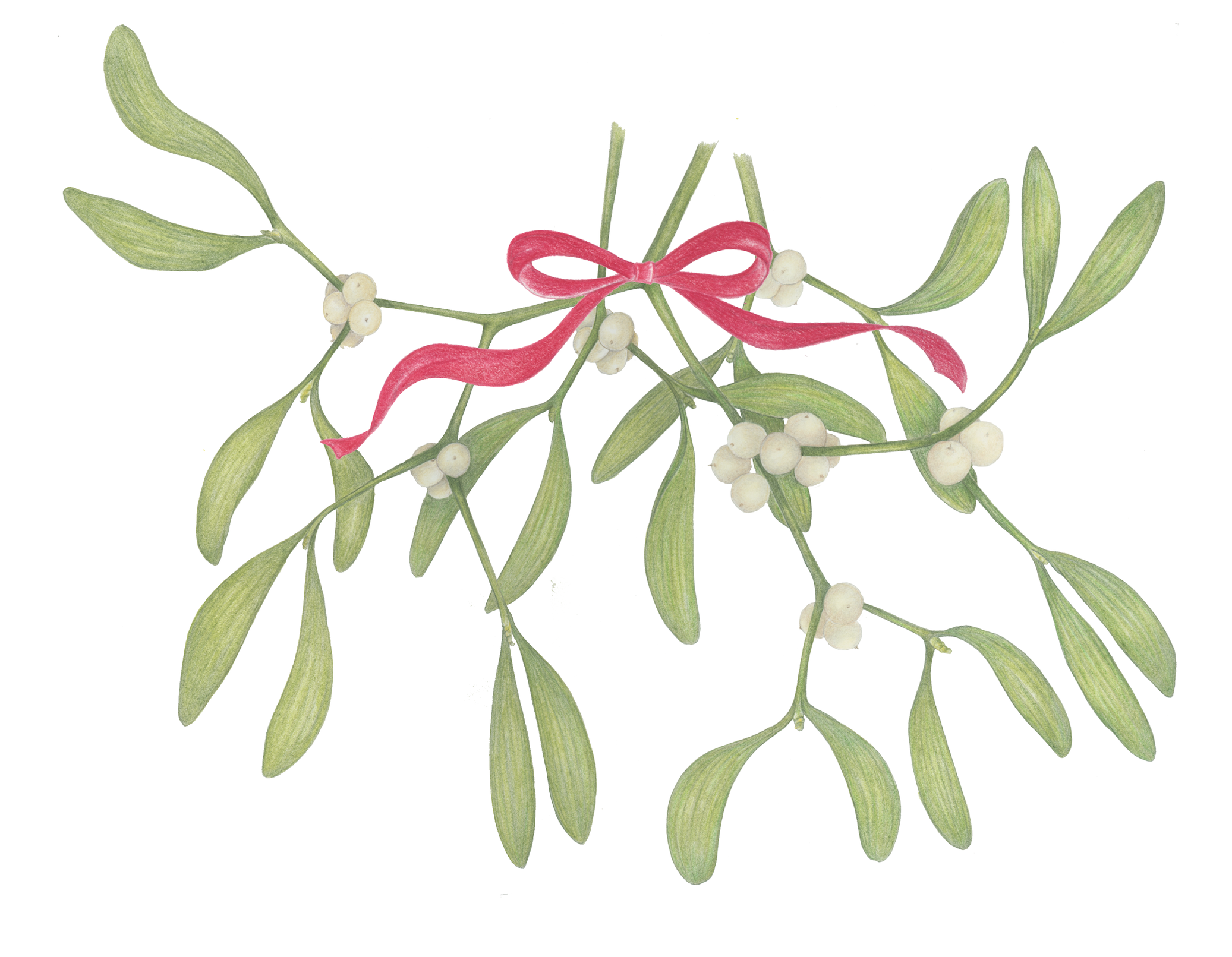 Mistletoe with Ribbon