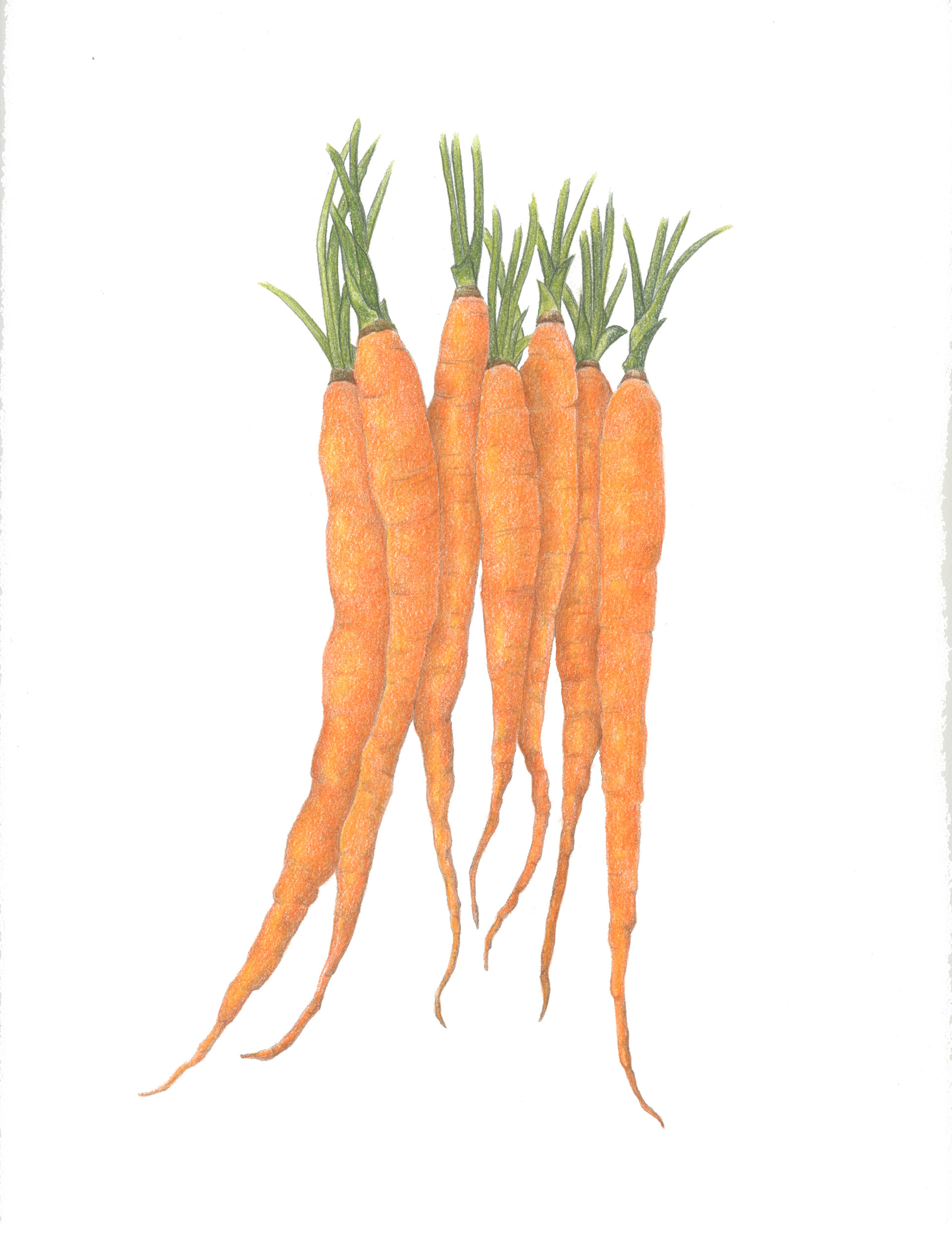 Carrots Alone