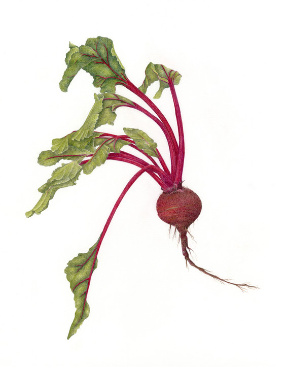 One Red Beet