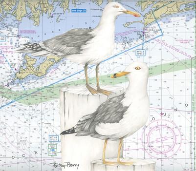 Gulls2 & Chart