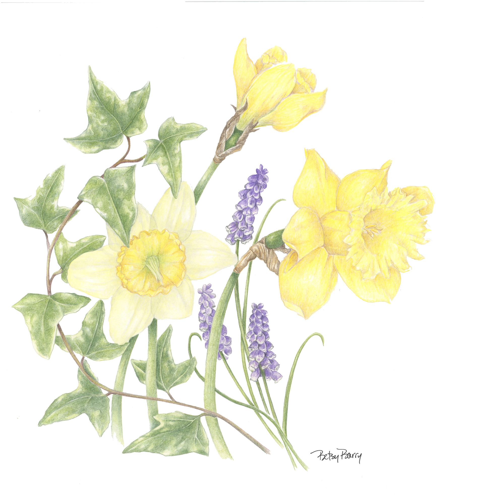 Daffodils and Ivy