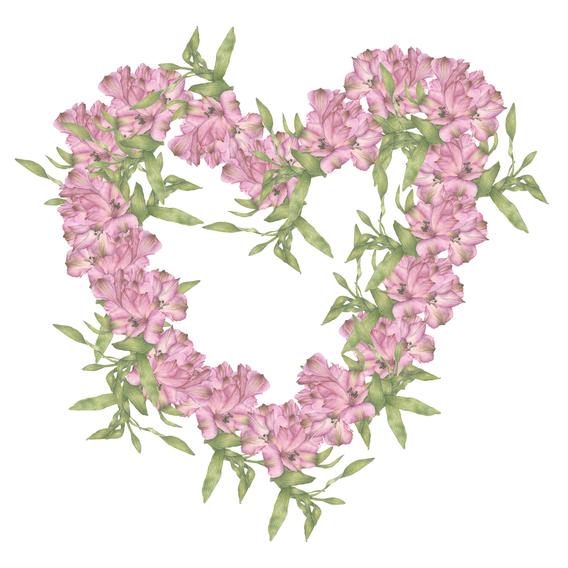 Alstroemeria Heart