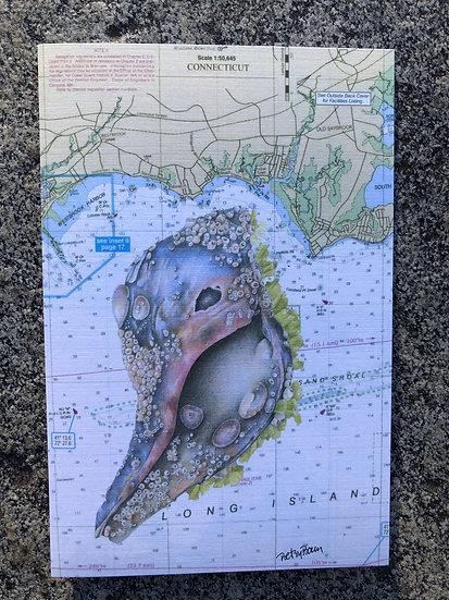Living Shell & nautical chart notecard