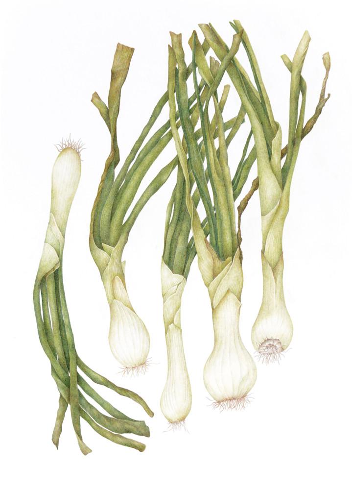 Globe Onions