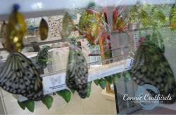 ButterflyMidwife620