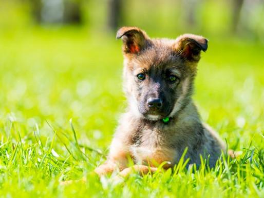 Hundekot sorgt für Unmut