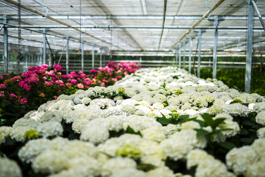 G. & A. Hooijman | Bloemen & Planten