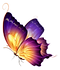 212-2129242_editing-butterfly-png-downlo