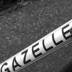 Gazelle%20CM_edited