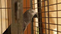 Focus still parrot profile