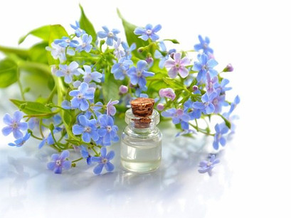 Forget-Me-Not || Foods For Memory