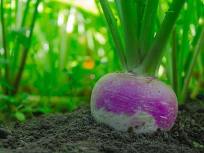 'Turnip' The Heat – Seasonal Eating