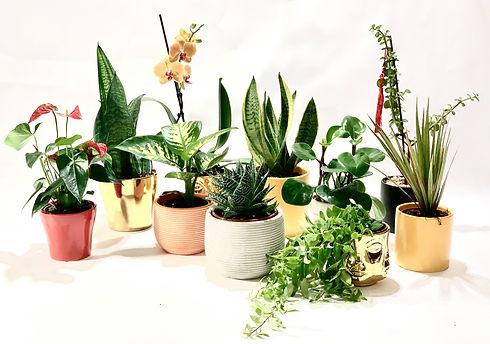 מבחר הצמחים.jpg
