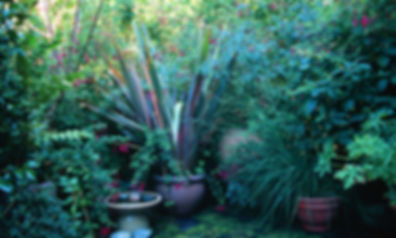 summer-garden-1259499.jpg