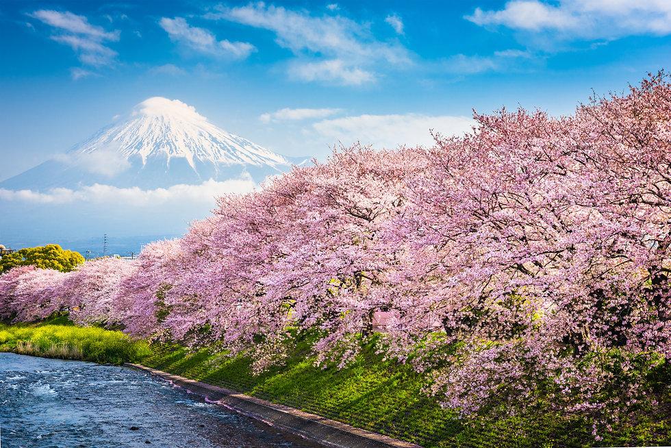 Mt. Fuji, Japan spring landscape..jpg