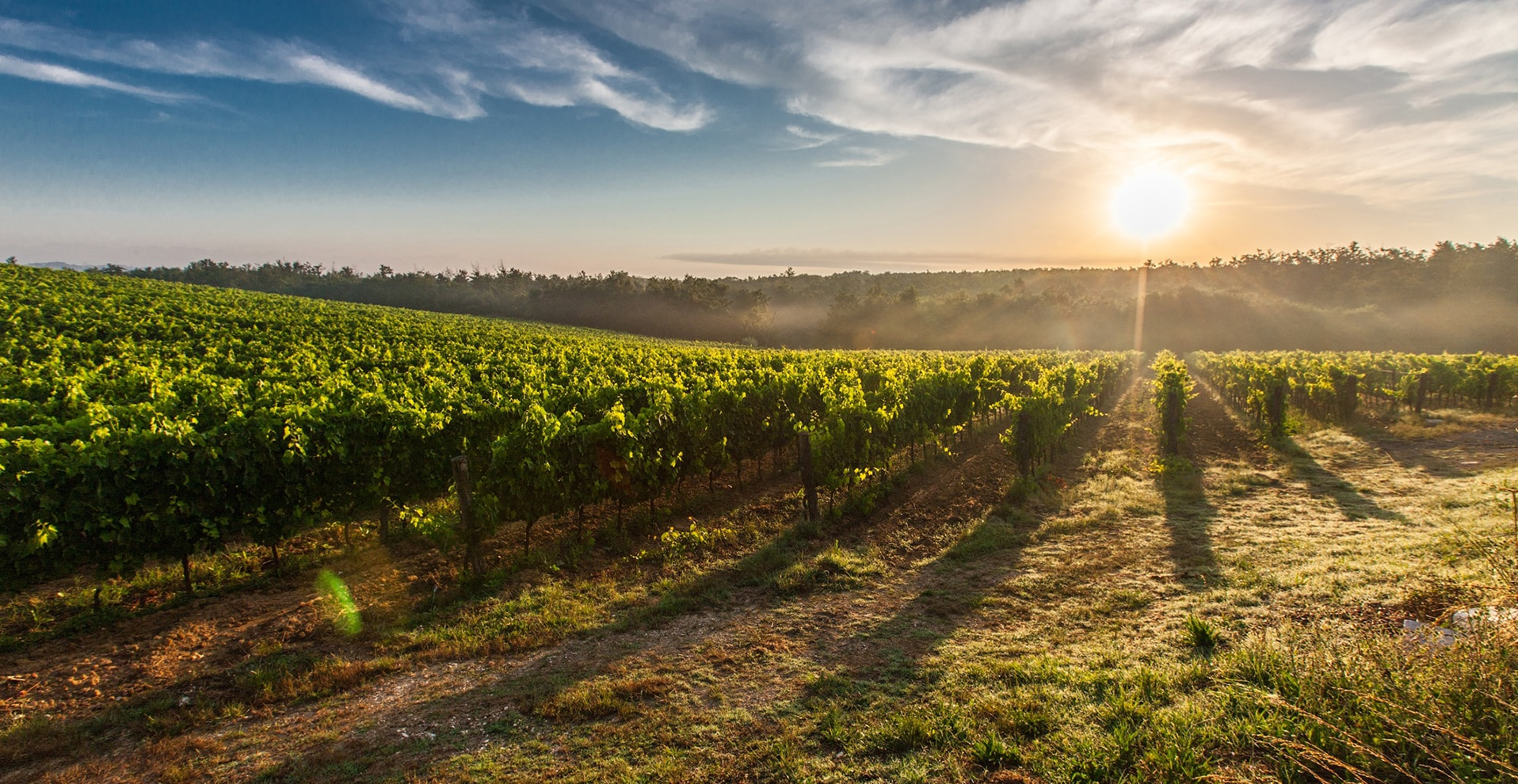 vignes-beaujolais-pommiers