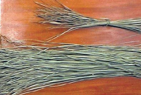'Darbha' grass, a natural preservative
