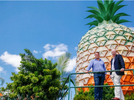 The Big Pineapple re-imagined