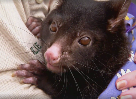 Queensland Weekender visits Wildlife HQ