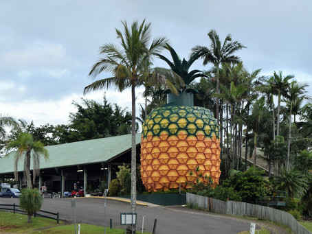 Big boost to Big Pineapple revamp's bottom line