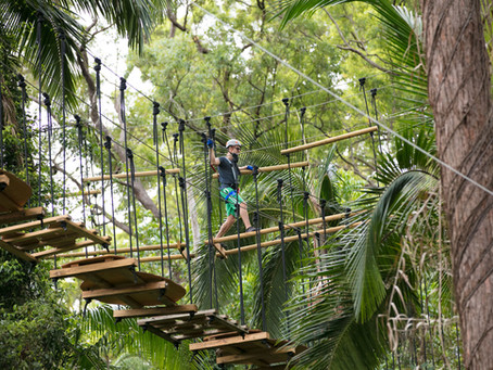 Will you be up for the TreeTop Challenge?