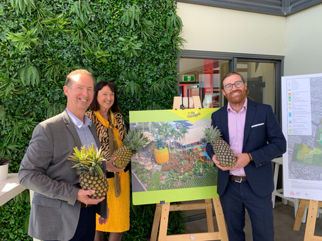 Compass helps steers direction at the Big Pineapple