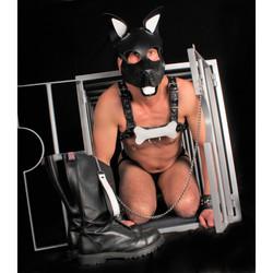puppy-os-en-cuir-blanc (2).jpg