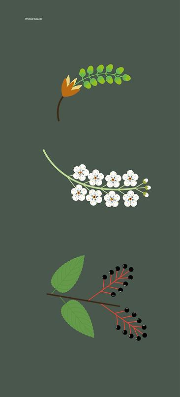 210512-Plantes-massif-rouge copie_` copie 9.png