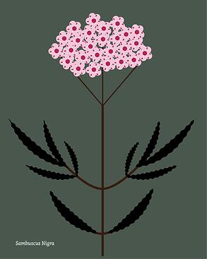 210512-Plantes-massif-rouge copie_Plan de travail 1 copie 5.png