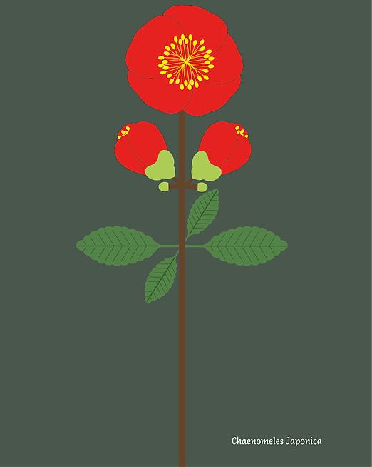 210512-Plantes-massif-rouge copie_Plan de travail 1 copie.png