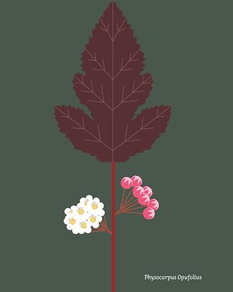 210512-Plantes-massif-rouge copie_Plan de travail 1.png