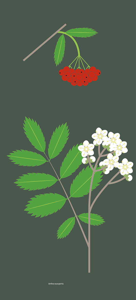 210512-Plantes-massif-rouge copie_` copie 8.png