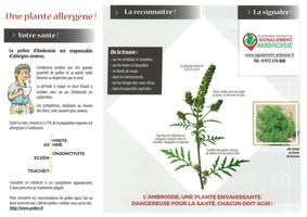 L'Ambroisie,une plante envahissante dangereuse pour la santé, chacun doit agir