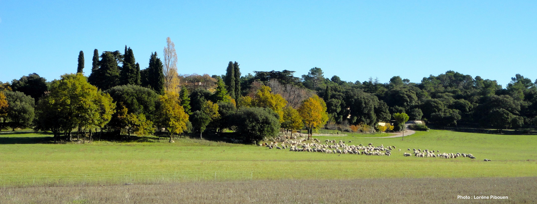 2_les_moutons_à_la_Grange.JPG