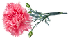 flower-4726087_640.png