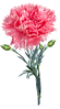 flower-4726087_640_edited.png