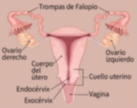 CANCER DE CUELLO DE UTERO Y DE OVARIOS.j