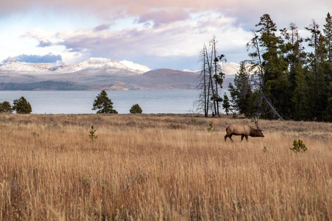 Yellowstone, Wyoming